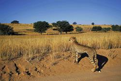 Kruger Safari Extension Tours